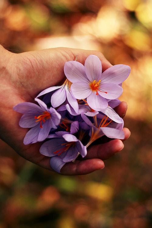 flower 2022